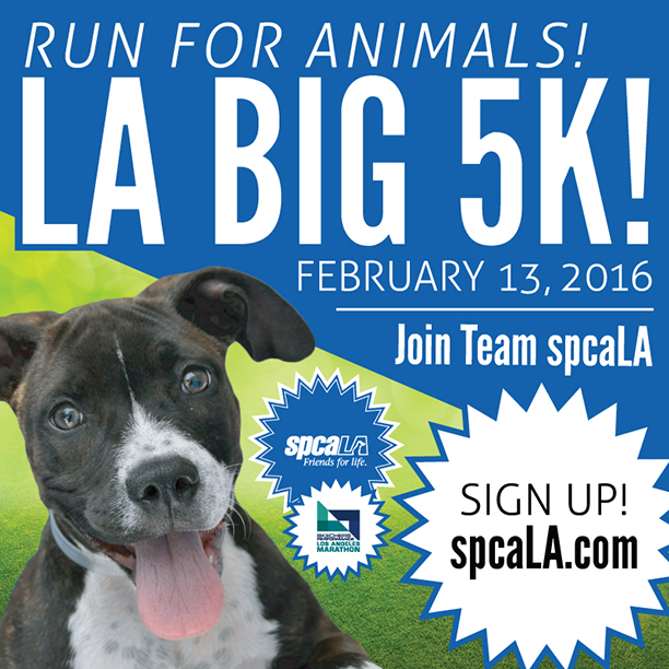 run for animals 2016 big 5k
